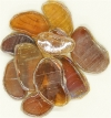Elfenglas amber (bernstein) transparent irisierend Nr. EG4